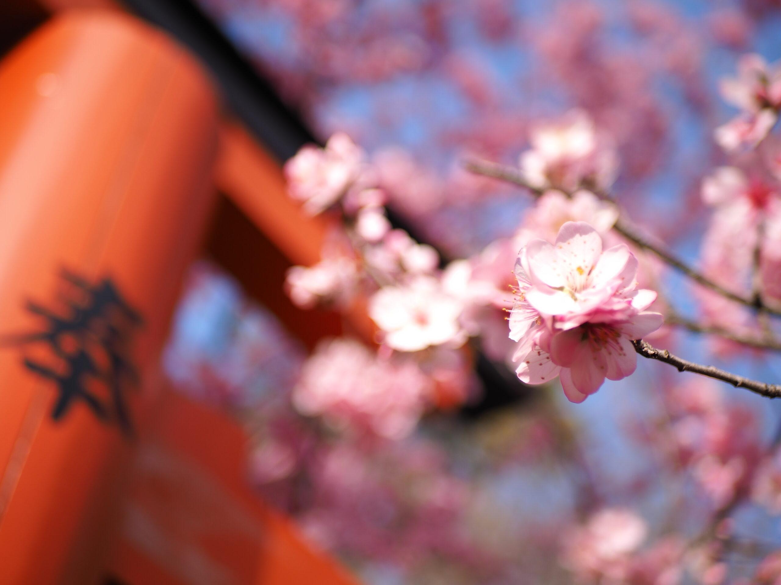 京都 桜 開花 予想 2021